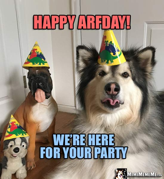Dog Birthday Meme Happy Arfday Were Here For Your Party