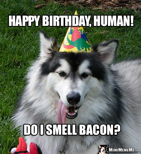 funny birthday dawgs dog happy birthday humor doggie woof day