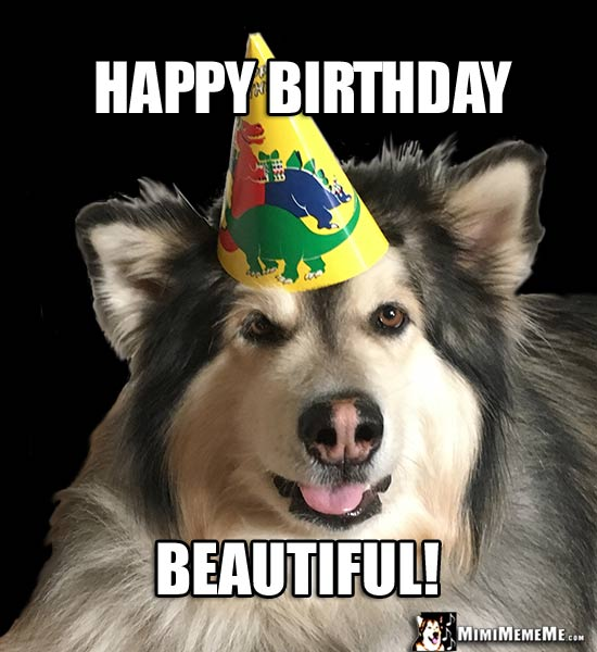 birthday dogs are funny canine happy birthday humor dog b day
