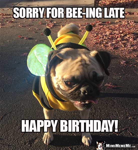 Funny Dog Tells Birthday Jokes Happy Belated Birthday From Dog Pg 7 Mimimememe The best belated birthday memes and ecards. mimi meme me