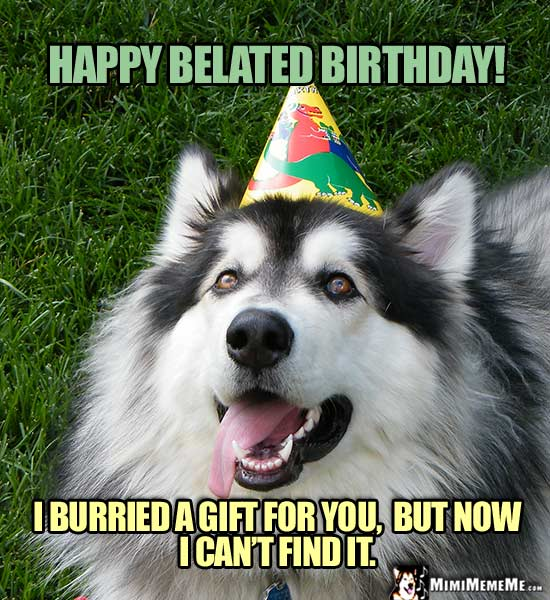 Dog Wearing Party Hat Says Happy Belated Birthday I Burried A Gift For You