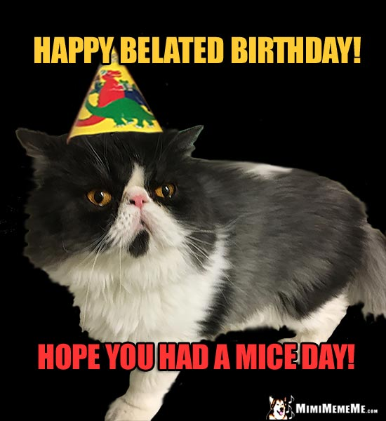 Cat Wearing Party Hat Says Happy Belated Birthday Hope You Had A Mice Day