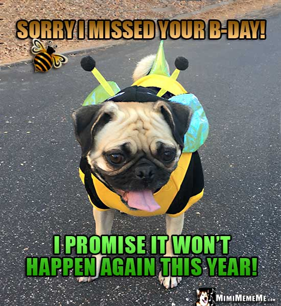 Pug in bee costumer says: Sorry I missed your B-Day! I promise it won't happen again this year!