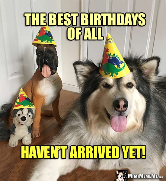 Dogs In Party Hats The Best Birthdays Of All Havent Arrived Yet