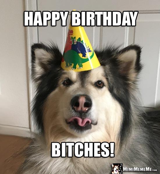 Funny Birthday Dawgs Dog Happy Birthday Humor Doggie Woof Day