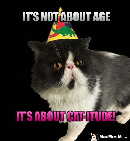 Birthday Humor Its Not About Age Cat Itude