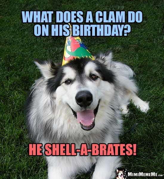 Happy Birthday from Dog! Funny Dog B-Day Jokes, Doggie ...