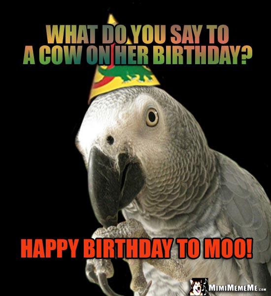 Happy Bird-Day, Parrot Happy Birthday Greetings, Bird B-Day Humor, Cheep LOLs. Pg 9