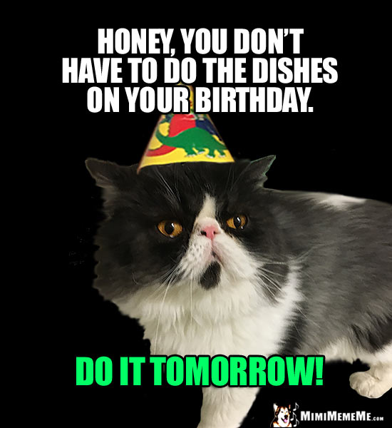Party Cat Says: Honey, you don't have to do the dishes on your birthday. Do it tomorrow!