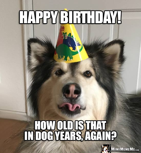 Funny Dog In Party Hat Happy Birthday How Old Is That Years