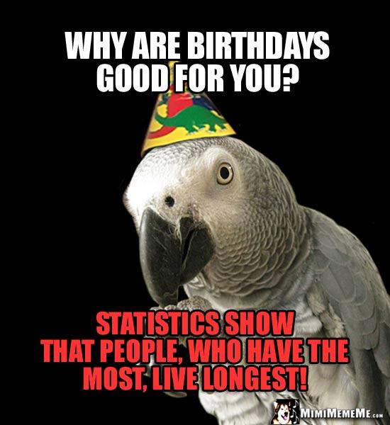 happy bird day parrot happy birthday greetings bird b day humor