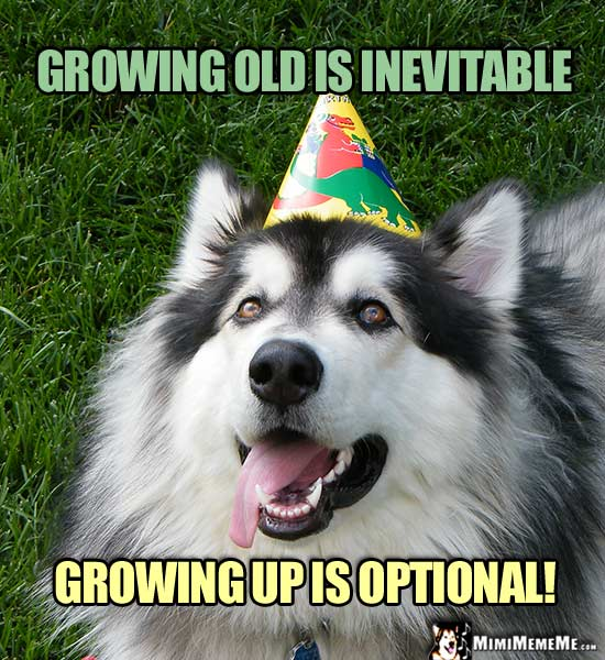 Dog In Party Hat Says Growing Old Is Inevitable Up Optional Happy