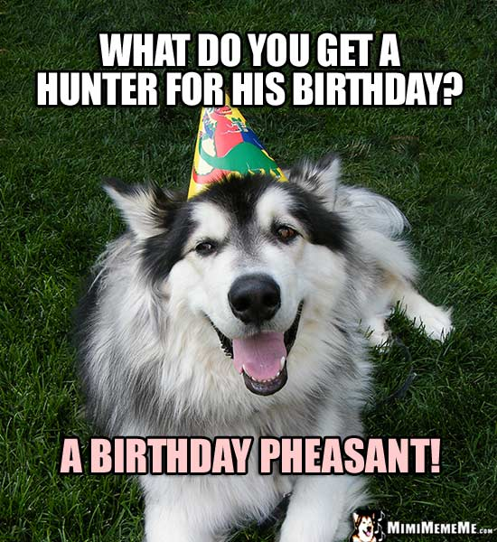 funny birthday riddles happy birthday humor questionable b day