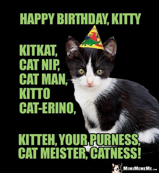 Kitten Meme Happy Birthday Kitty Kitkat Cat Nip Man Kitto
