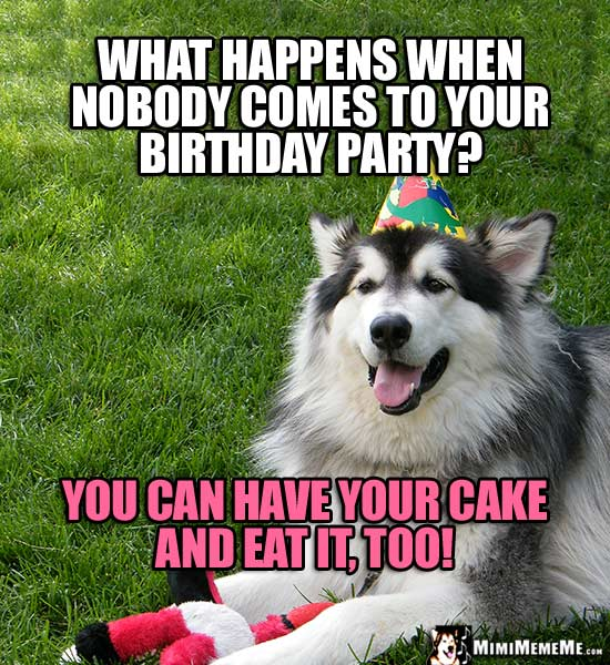 Party Dog Comments What Happens When Nobody Comes To Your Birthday You Can