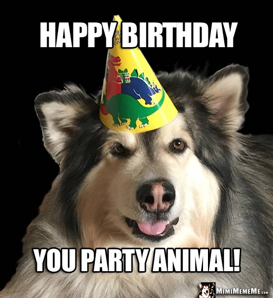 Birthday Dogs Are Funny Canine Happy Birthday Humor Dog B Day Memes Pg 19 Mimimememe