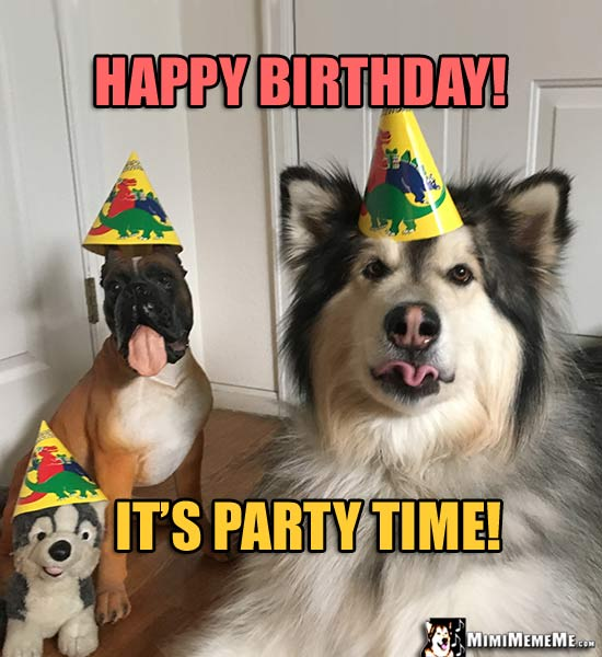 Dog Toys Wearing Party Hats Say Happy Birthday Its Time