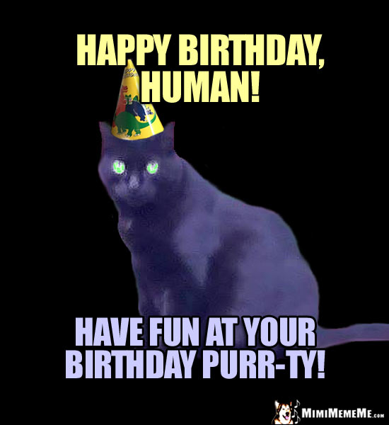 Party Cat Says Happy Birthday Human Have Fun At Your Purr