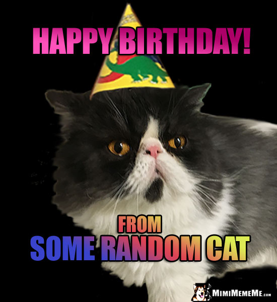 Cat Wearing Party Hat Says Happy Birthday From Some Random