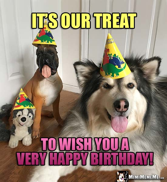 Dogs In Party Hats Say Its Our Treat To Wish You A Very Happy Birthday