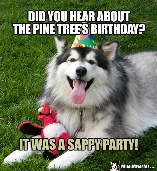 Birthday Riddles Are Funny! Happy Birthday Jokes