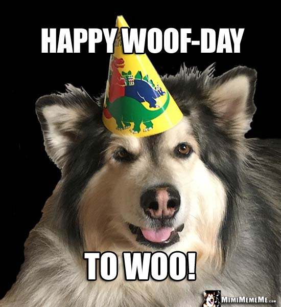 Handsome Dog In Party Hat Says Happy Woof Day To Woo