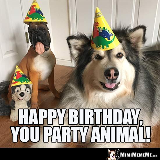 Dog Birthday Meme Happy You Party Animal