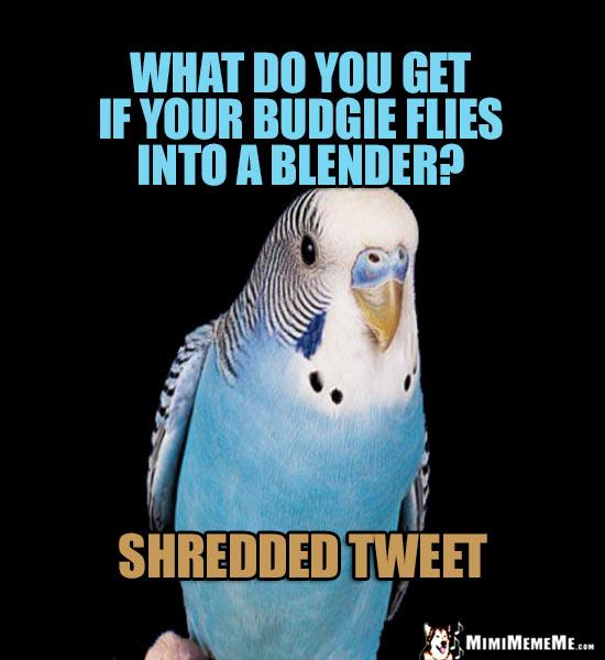 Funny Bird Jokes Avian Humor Cheep Birdie Laughs Pg 2 Mimimememe