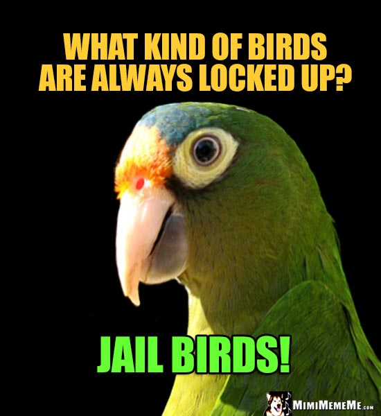 Funny Parrot Asks: What kind of birds are always locked up? Jail Birds!