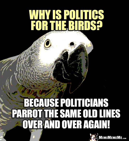 Genius Parrot Asks: Why is politics for the birds? Because politicians parrot the same old line over and over again!