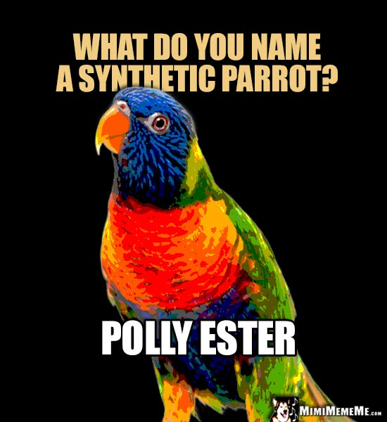 Painful Polly Puns Talking Parrot Word Play Polly Funny