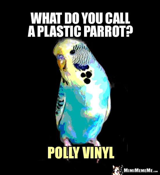 Funny Parrot Pun: What do you call a plastic parrot? Polly Vinyl