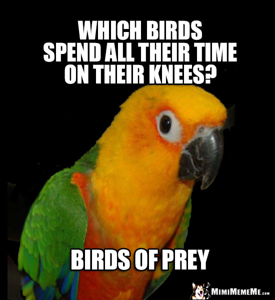 Bird Puns, Parrot Word Play, Cheep LOLs, Polly Humor  Pg 2 - MimiMemeMe