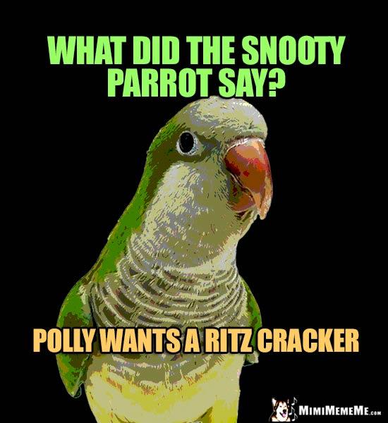 Polly Puns Parrot Jokes Talking Bird Word Play Cheep