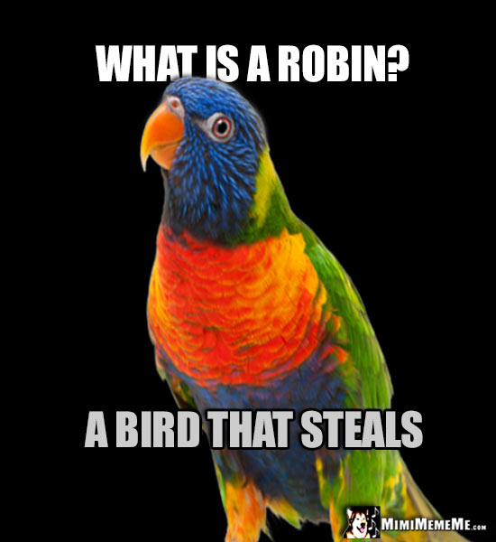 Nosy Parrot Asks: What is a robin? A bird that steals.