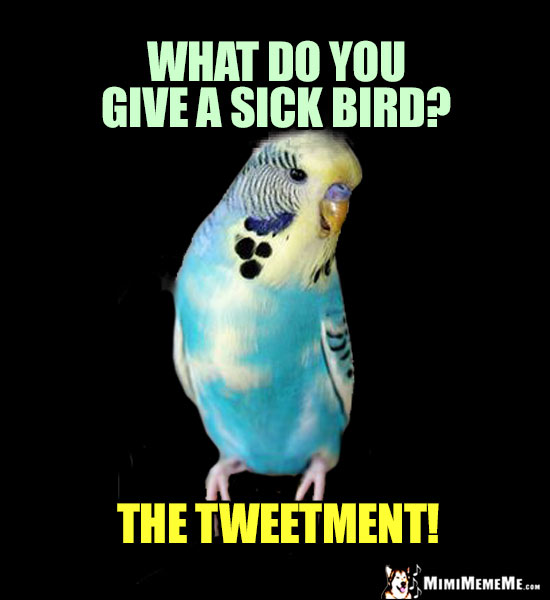 Parrot Riddle: What do you give a sick bird? The Tweetment!