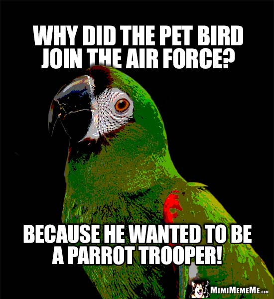Funny Parrot Says: Why did the pet bird join the air force? Because he wanted to be a parrot trooper!