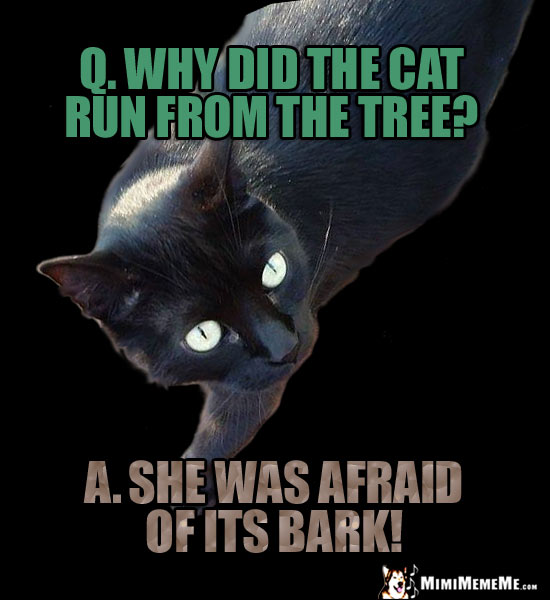 Funny Cat Riddles A Mewsing Kitty Jokes Catty Q Amp A