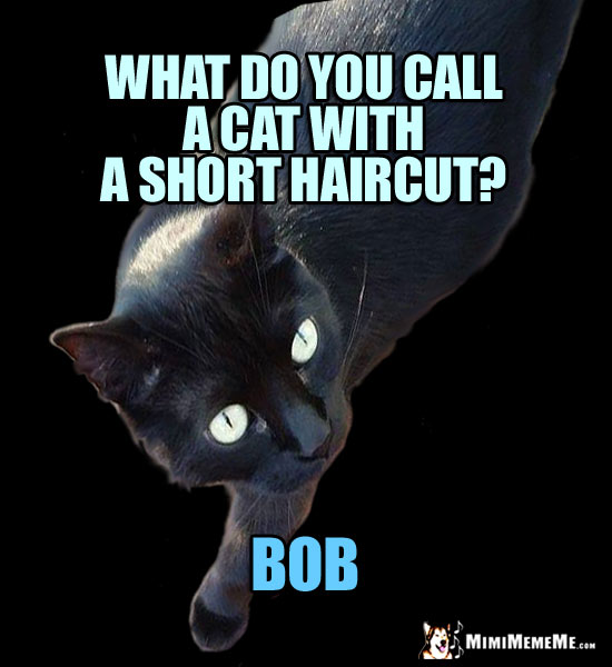 Stylish Cat Humor: What do you call a cat with a short haircut? BOB