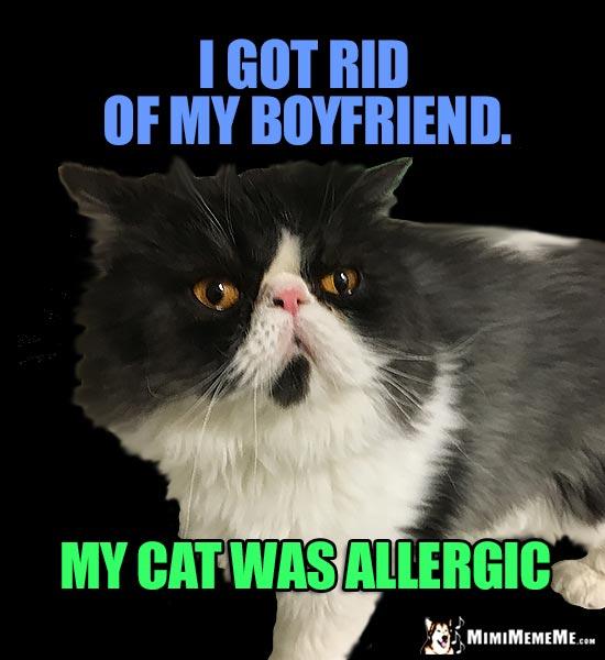 catBoyfriend manly cat jokes, funny cat vs man memes, masculine feline humor pg