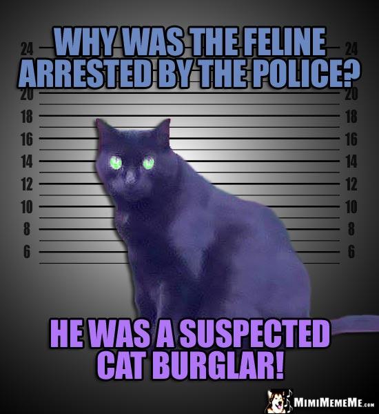 Criminal Cat Jokes Mugshot Kitty Riddles Illegally Funny