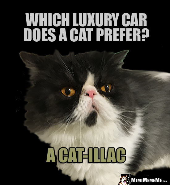 Get Fuzzy Cat Car
