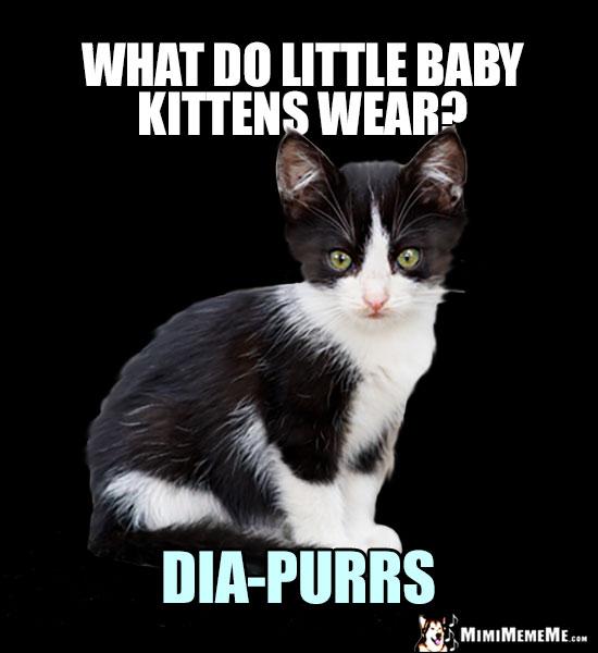 Kitten Jokes Little Kitty Riddles Funny Baby Cat Memes Cute Kitteh Humor Pg 12 Mimimememe
