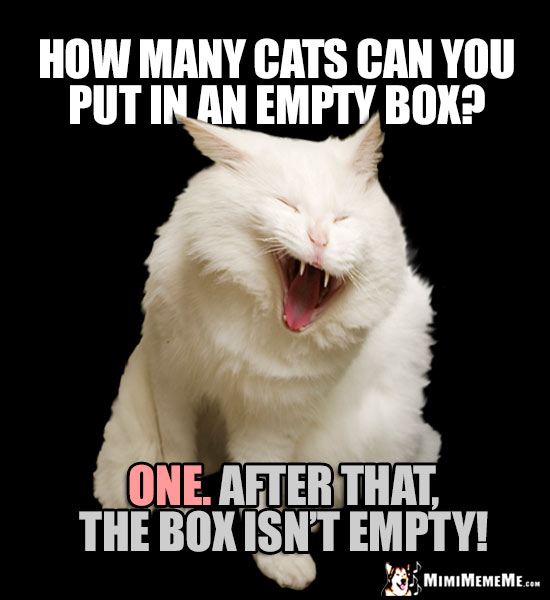 Laughing Cat Riddle: How many cats can you put in an empty box? ONE. After that, the box isn't empty!