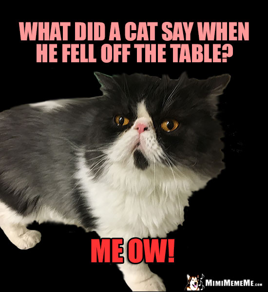 Funny Animal Riddles, Hilarious Pet FAQs, Cheep Laughs ...