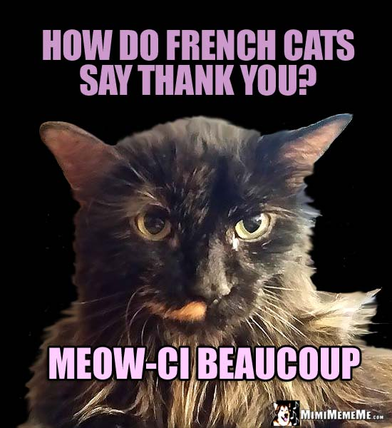 Image result for cat with french caption