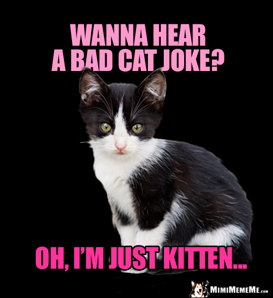 Kitten Jokes Little Kitty Riddles Funny Baby Cat Memes Cute