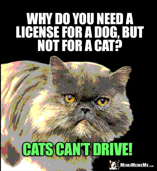 catLicense cat car jokes, auto kitty riddles, funny driving cat memes, mew