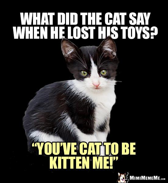 Kitten Jokes Little Kitty Riddles Funny Baby Cat Memes