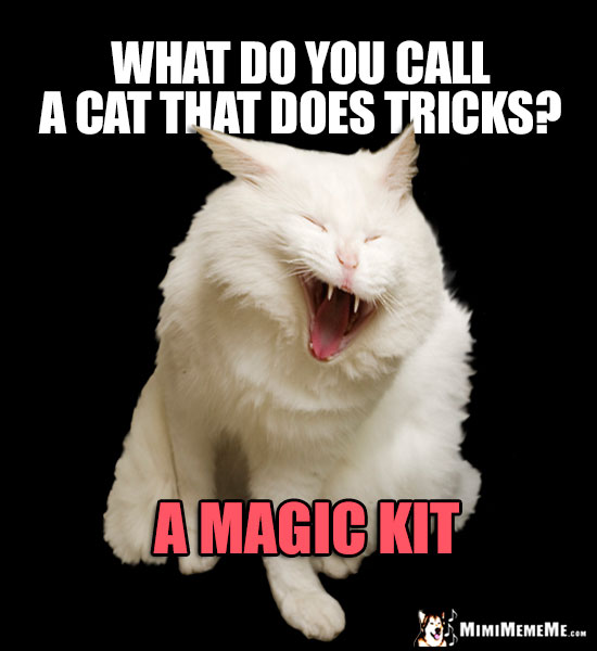 Laughing Cat Humor: What do you all a cat that does tricks? A Magic Kit
